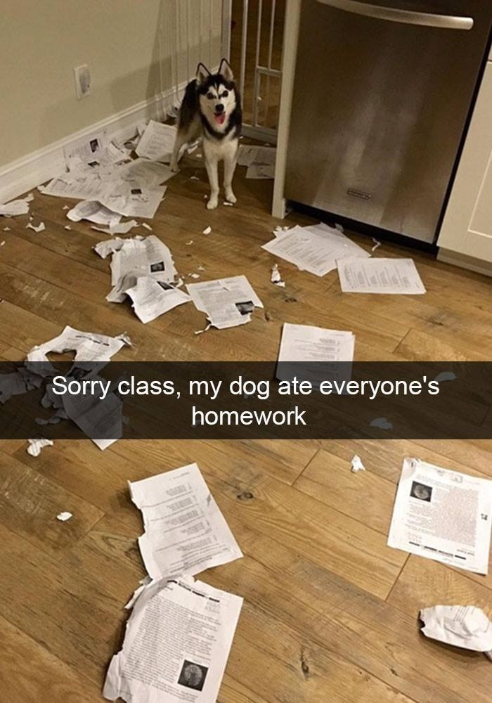 Floor - Sorry class, my dog ate everyone's homework