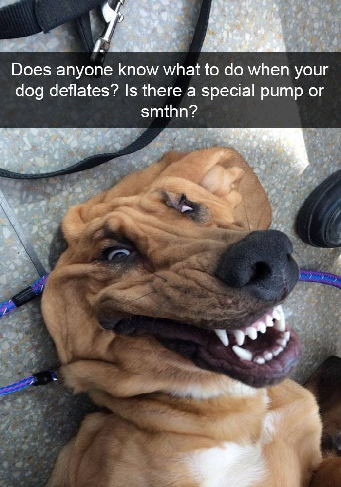 Dog - Does anyone know what to do when your dog deflates? Is there a special pump or smthn?