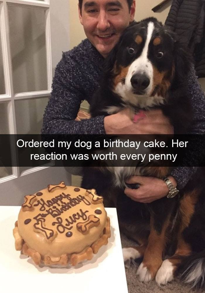 Dog - Ordered my dog a birthday cake. Her reaction was worth every penny