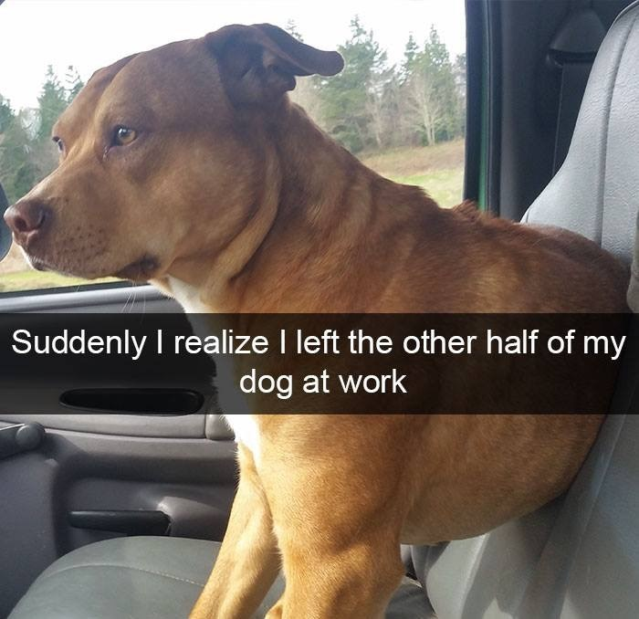Dog - Suddenly I realize I left the other half of my dog at work