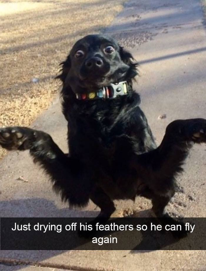 Dog - Just drying off his feathers so he can fly again