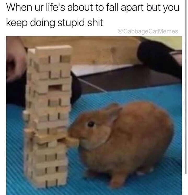 Memes animals rabbits - 9026762496