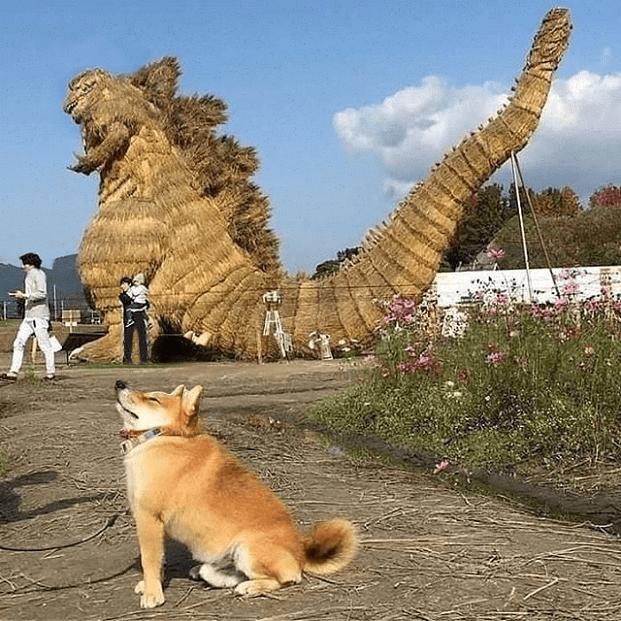 dogs doge godzilla Memes - 9026866688