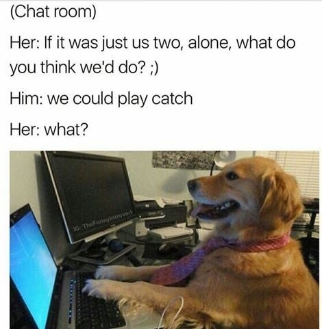 dog chatting with human wants to play catch