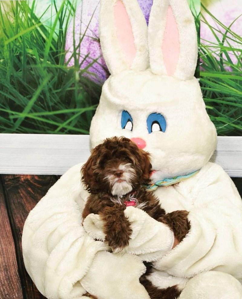 Rabbit - SAILEY