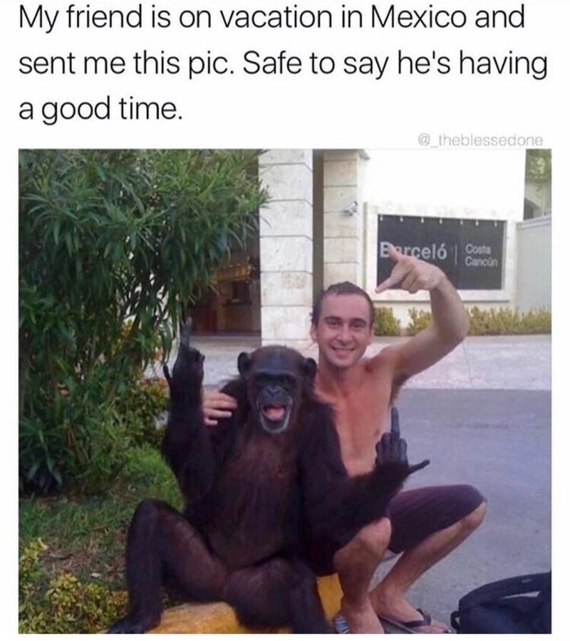 Memes monkey animals - 9026881792