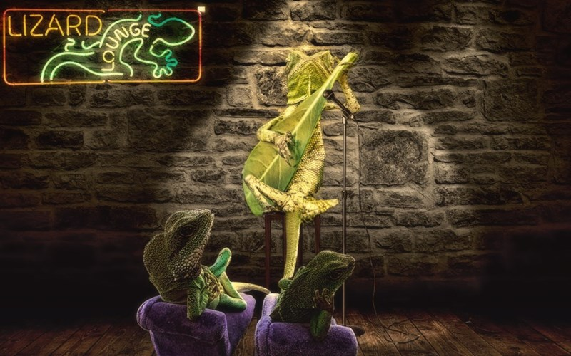 Funny photoshop battle pic of lazy lizard playing the banjo leaf in a bar with neon signs in the background.