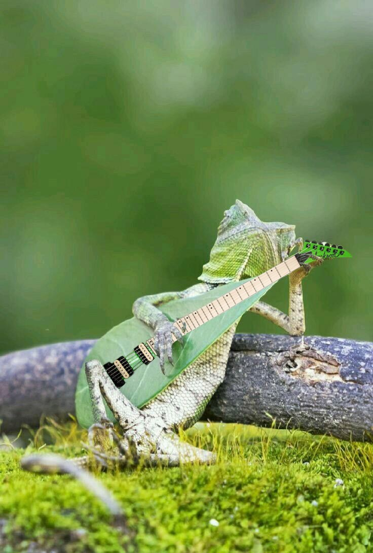 Photoshop some strings onto funny picture of gecko with banjo leaf.