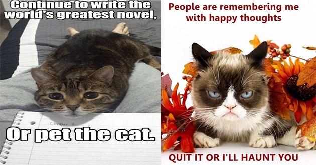 lolcats cats funny memes