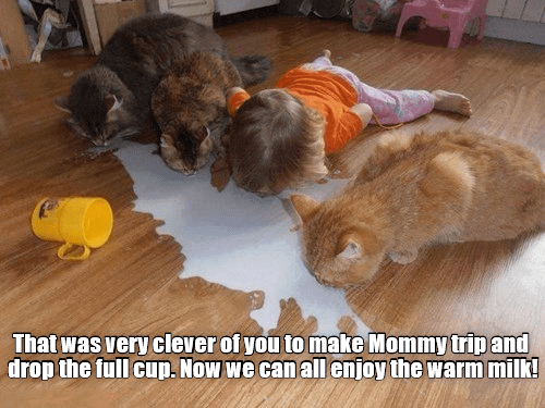 child milk clever enjoy mommy trip caption Cats - 9027387392
