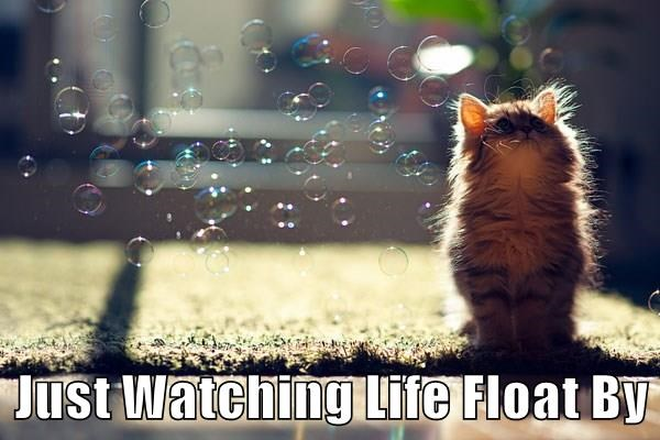 Meme of a cute kitten watching bubbles and life just float by