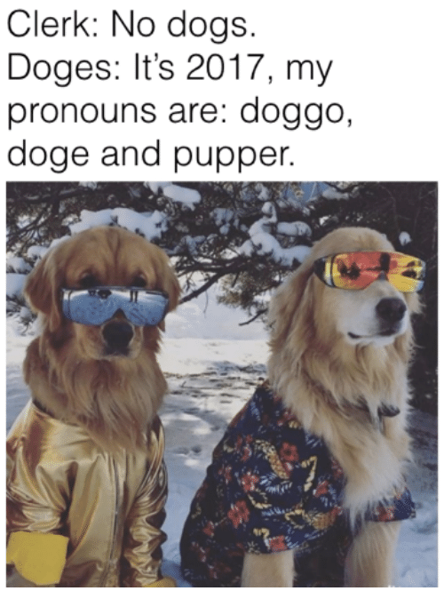 Funny Dog meme of dogs wearing sunglasses and correcting a clerk about the correct pronoun he ought to be using for them.