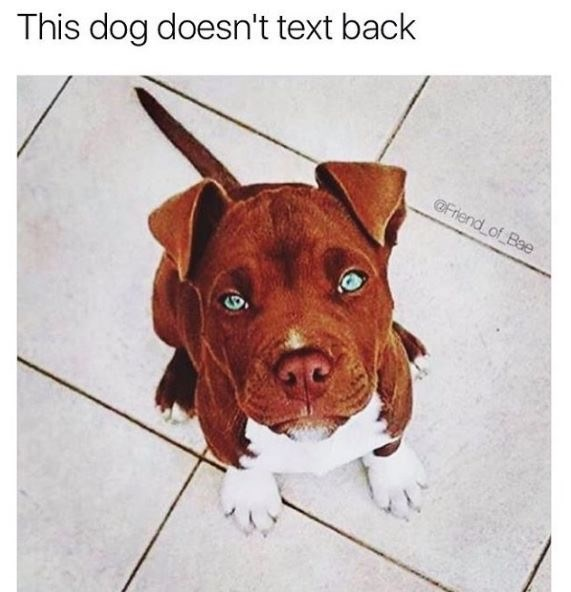 dating meme - Dog - This dog doesn't text back @Friend of Bae