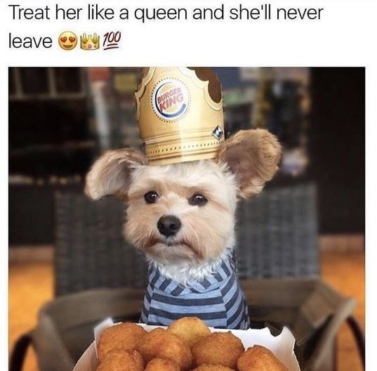 dating meme - Dog breed - Treat her like a queen and she'll never leave 0 T00 BURGER KING