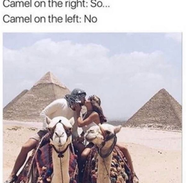 dating meme - Camel - Camel on the right: So... Camel on the left: No