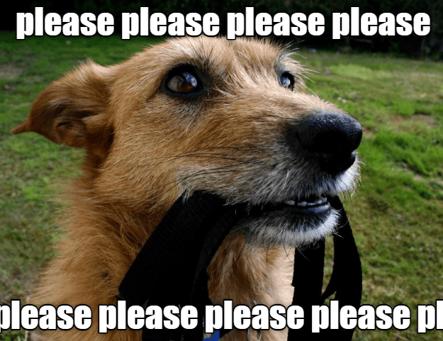 Funny dog meme of a picture of a dog with a leash in his mouth and asking please to go for a walk