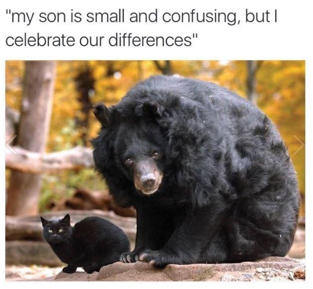 Memes Cats animals - 9027773184