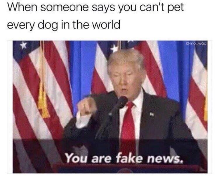 dogs donald trump Memes - 9027776000