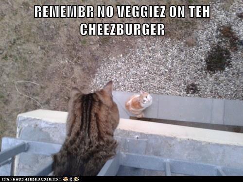 Cheezburger Image 9027802368