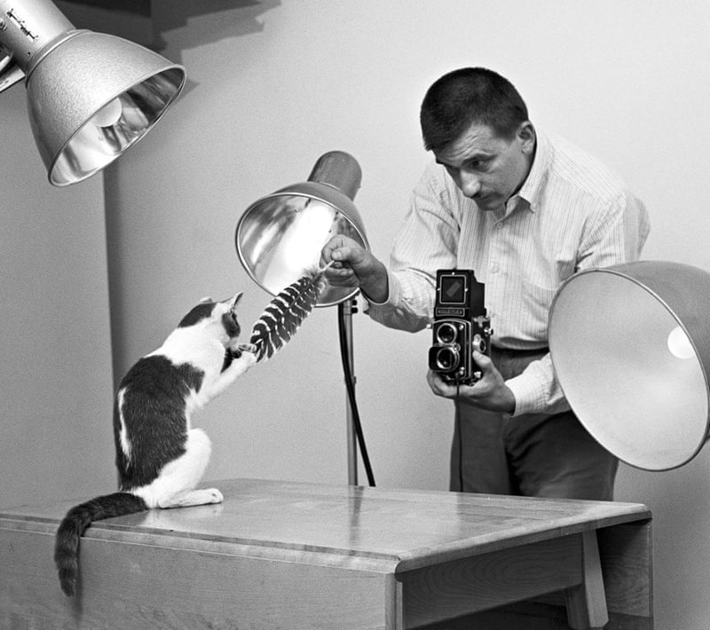 Walter Chandoha american photographer of cats