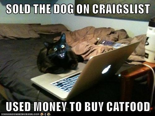 Cat on the computer meme - Sold the Dog on Craigslist and bought cat food with the money.