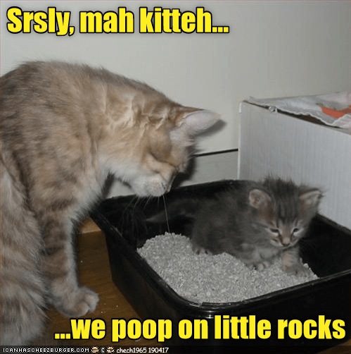 funny meme of a cat teaching the kitten the harsh realities of being a house cat. And all that just in exchange for endless food with no hunting.