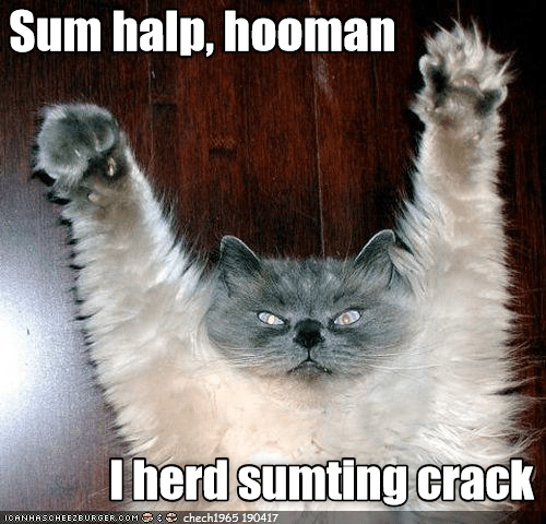 crack something cat halp human heard caption - 9028169984