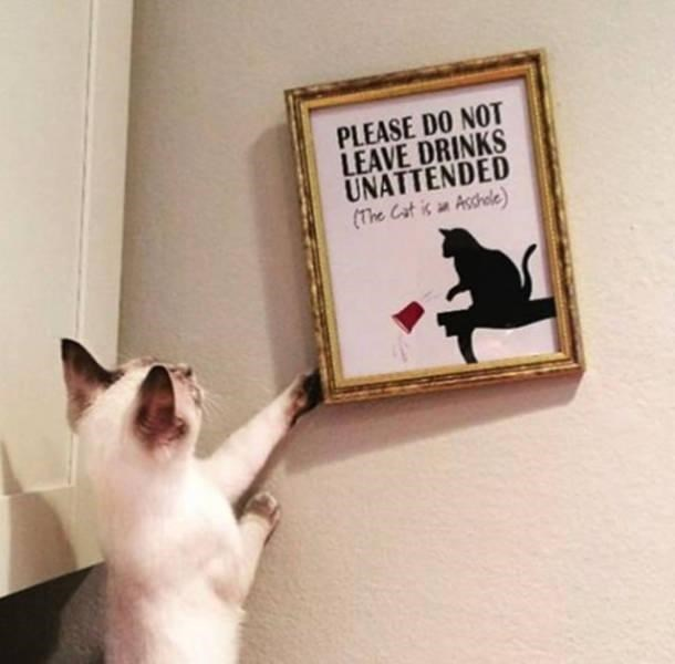 Cat trying to knock the frame sideways on a picture.