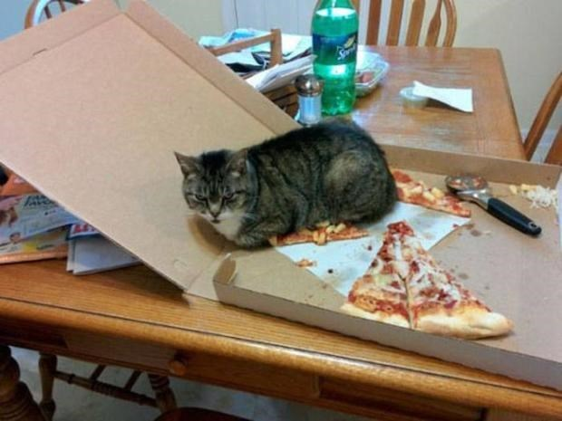 Cat sitting on a pizza.