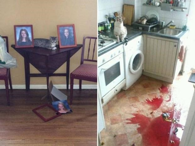 Mess in a house that cat clearly caused.