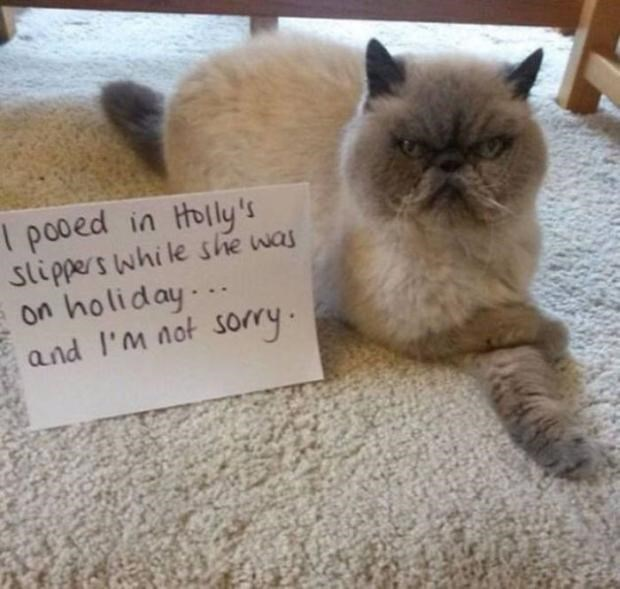 Bad cat pooped in woman's slipper