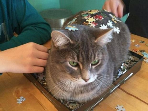 Cat that ruined the puzzle