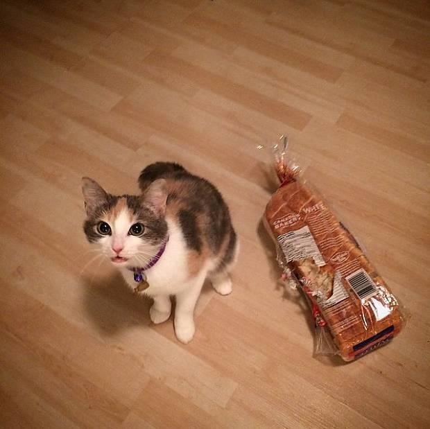 Cat that chewed through a loaf of bread.