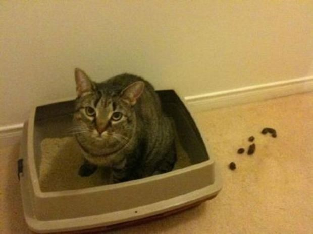 Cat that pooped right next to the litter box.