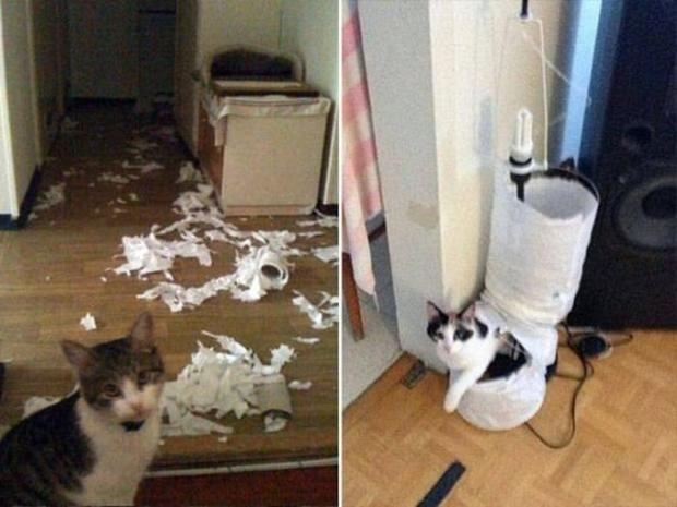 Pictures of cats that tore lamps to shreds.