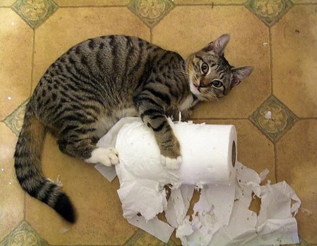 Cats tearing up a roll of toilette paper.