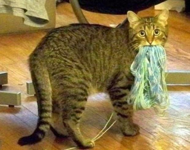 Cat that ruined a ball of yarn.