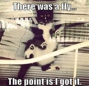 Cat that ruined the blinds and says he killed a fly in the process.