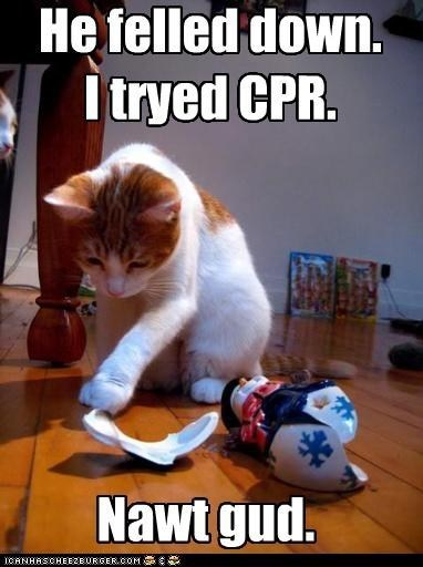Cat meme of cat that broke a nice lamp and tried CPR.