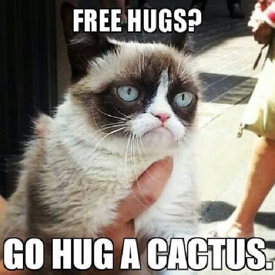 10 of grumpy cat's best hilarious memes i can has cheezburger?