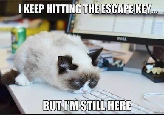 Tardar Sauce AKA Grumpy cat meme about the ESC key and how he still here no matter how many times she presses it.