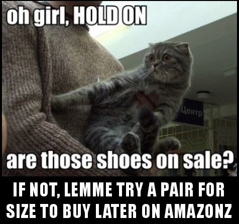 cat meme about shoes on sale and just trying them on for size to buy later on Amazon.