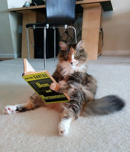 Cat - E-PAL SARTRE BEING and NOTHINGNESS