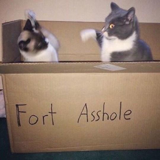 Cat - Fort Asshole