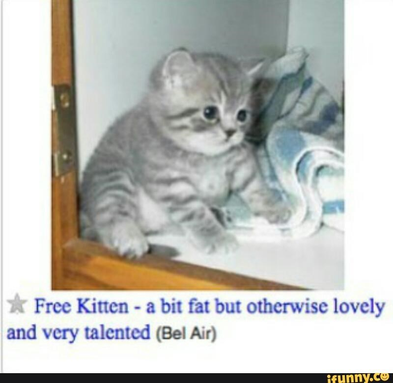 Fat kitten free on Craigslist