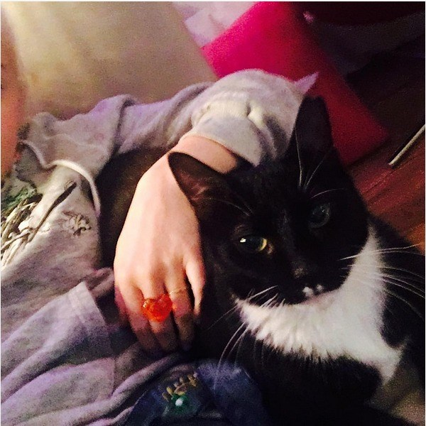 Miley Cyrus's cat named Harlem