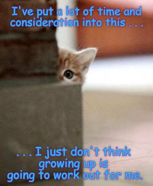 consideration growing up kitten caption - 9028450816