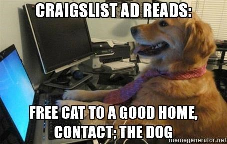 Dog goes on Craigslist and gives away the cat.