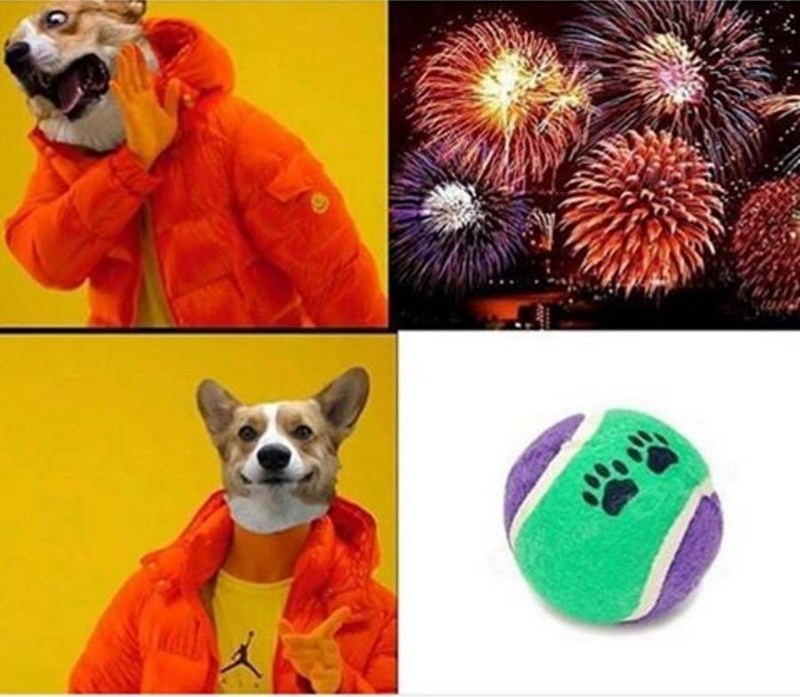 Drake with a dog head does not like fireworks, Drake with a dog head likes balls.