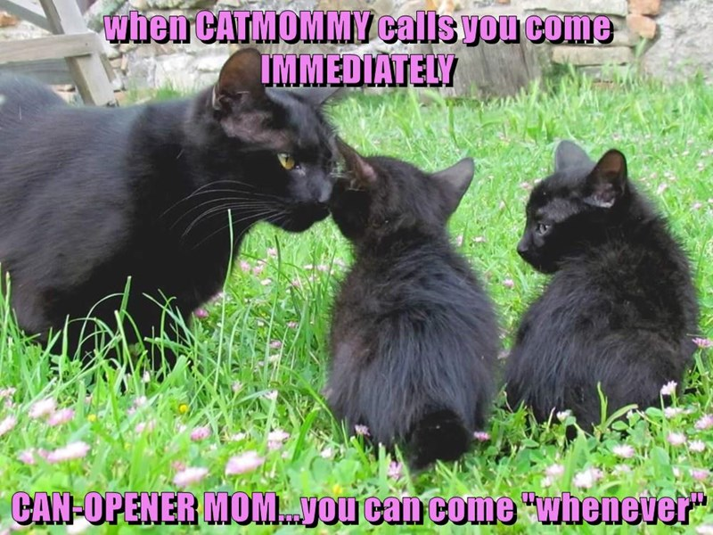 Funny picture of a cat and her kittens. Made into a meme with captions how the kittens listen to their momma-cat, but not to their momma-human.